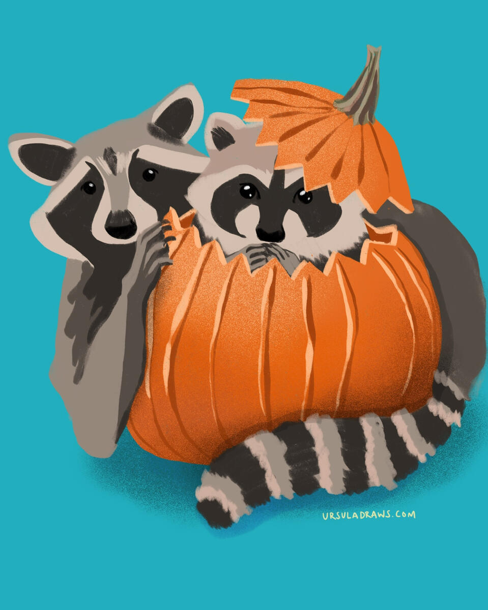 Procreate - Raccoons Playing in Pumpkin Illustration by Ursula Viglietta